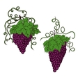Hand drawn grapes vector image