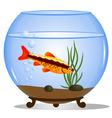 Fish in a round aquarium vector image