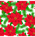 seamless pattern of poinsettia and spruce branch vector image