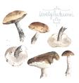 Set of watercolor mushrooms Brown cap boletus vector image