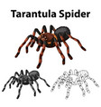doodle character for tarantula spider vector image