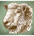 engraving head of sheep retro vector image