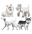 Different kind of canine vector image vector image