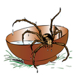 Wet spider coming out of a bowl vector image vector image