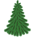Fir tree without Christmas decorations vector image
