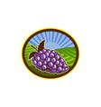 Grapes Vineyard Farm Oval Woodcut vector image
