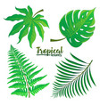 set of tropical palm leaves isolated on vector image