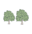 A view of trees vector image vector image
