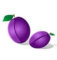 plum vector image