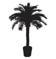 palm tree silhouetter vector image vector image