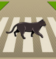 black cat crosses the road pop art vector image