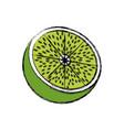 lemon citrus fruit fresh half vitamin vector image