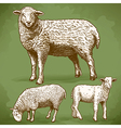 engraving sheeps retro vector image