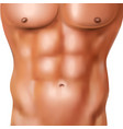 realistic man abs pack vector image