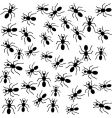 ants vector image vector image