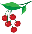 Branch of ripe berries vector image vector image