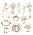 Sketch of healthy organic vegetables icons vector image
