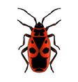 pyrrhocoris apterus beetle bug-soldier sketch vector image