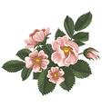 Wild rose vector image