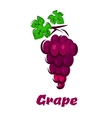 Cartooned grape vine with bunch and leaves vector image