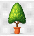 green tree in pot on transparent background vector image