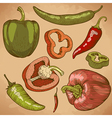 engraving peppers retro vector image