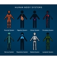 Human body systems anatomy vector image