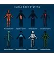 Human body systems anatomy vector image