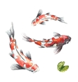 Three Koi fish on white background vector image