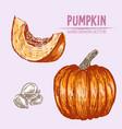 digital detailed pumpkin hand drawn vector image