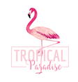 Tropical Bird Flamingo Background Summer Design vector image