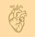 heart the internal human organ anatomical vector image