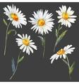 Watercolor daisy set vector image