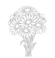 beautiful daisies isolated on a white background vector image