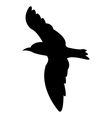 gull on white background vector image