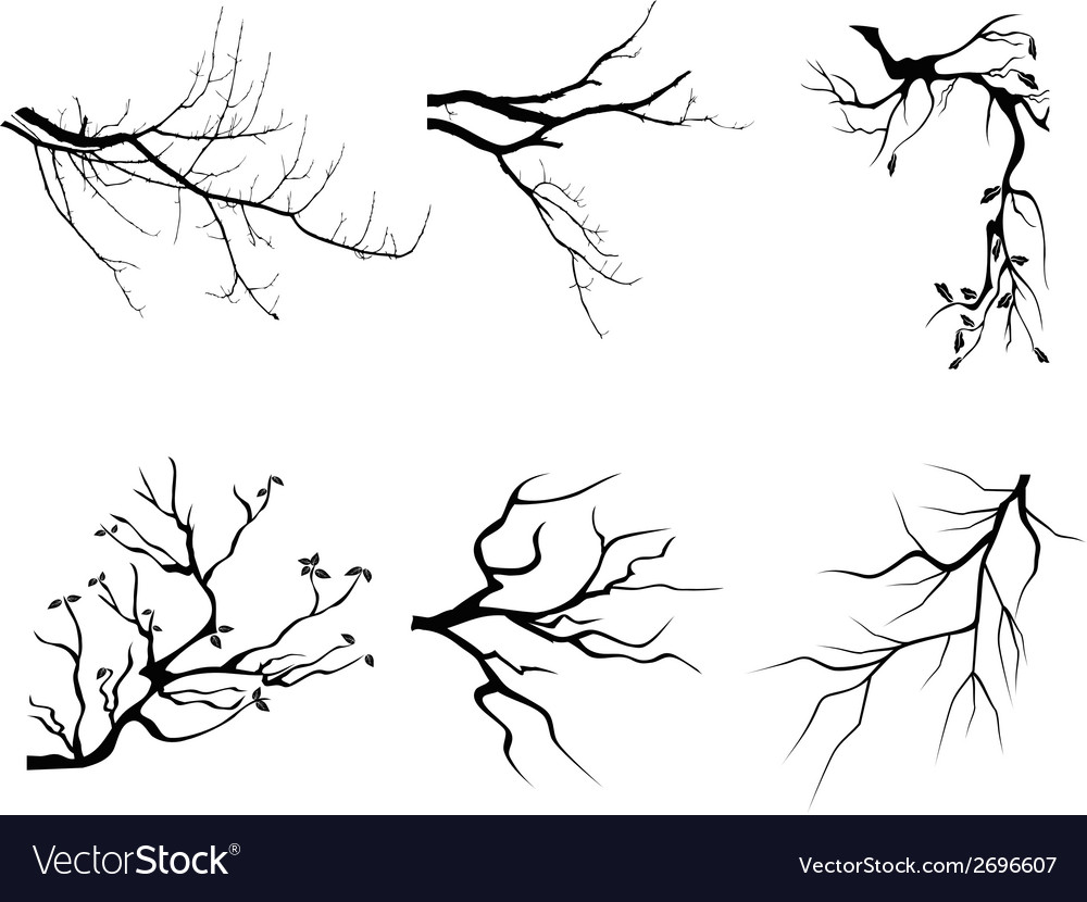 Branch silhouette shapes vector