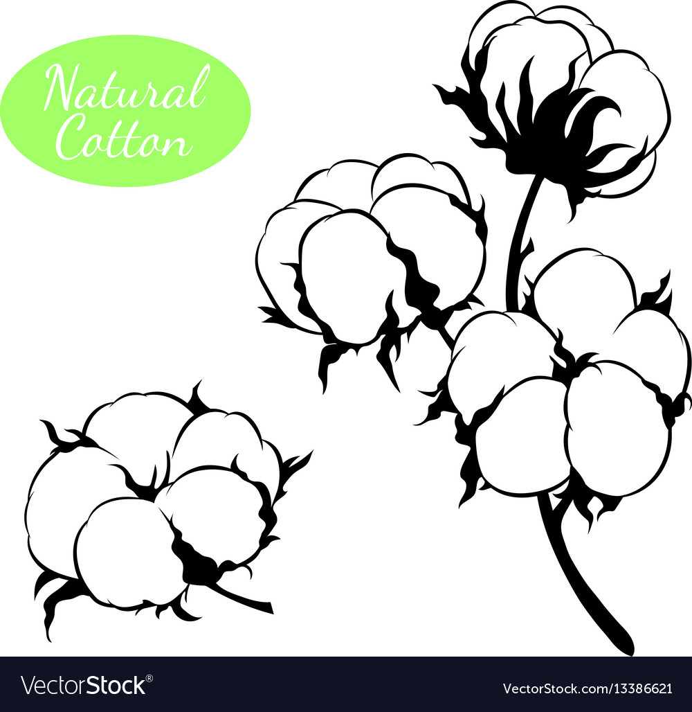 Set of cotton plant branch with flowers vector