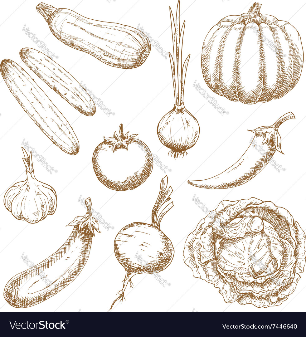 Fresh vegetables isolated sketches set vector