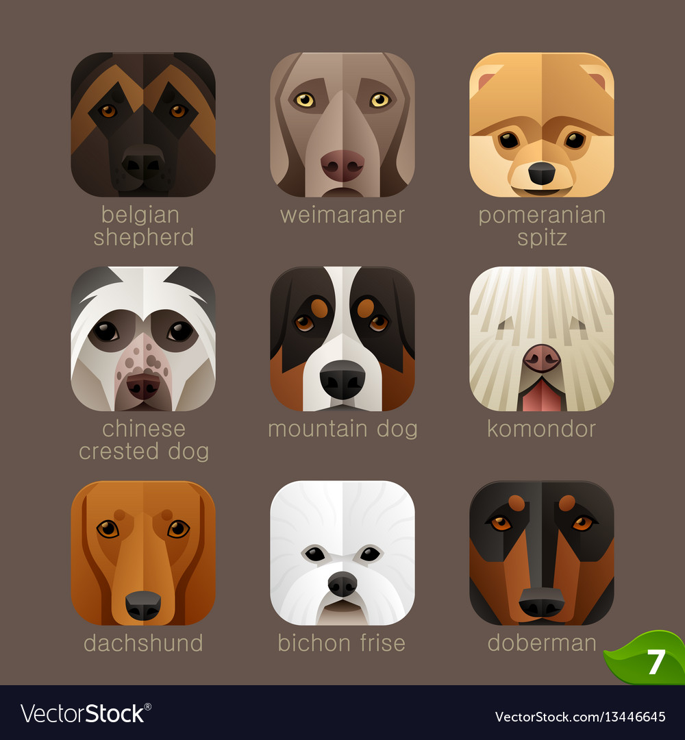 Animal faces for app iconsdogs set 6 vector