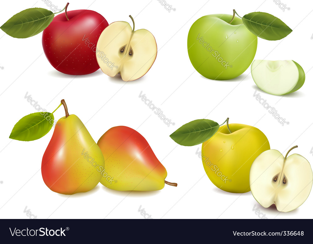 Group with apples and pears vector