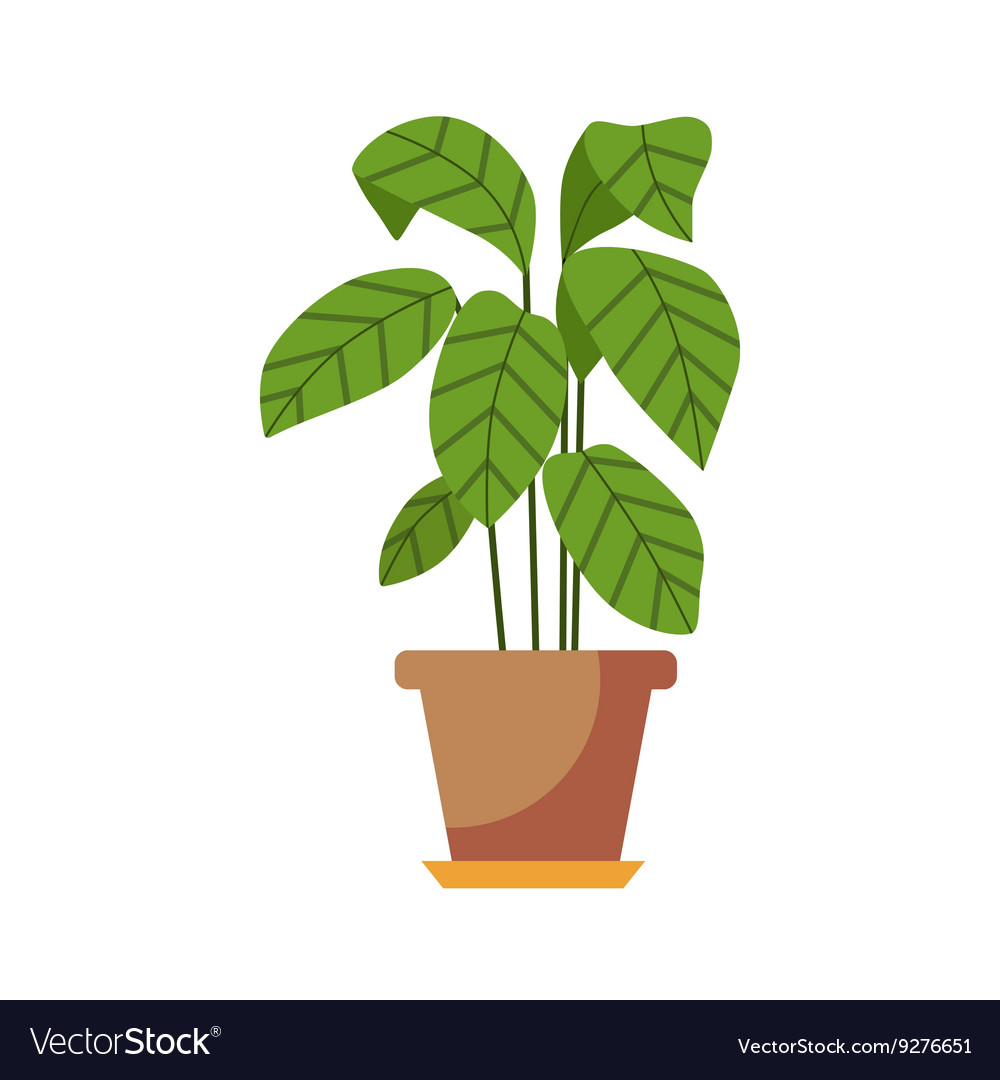 Indoor plant isolated vector