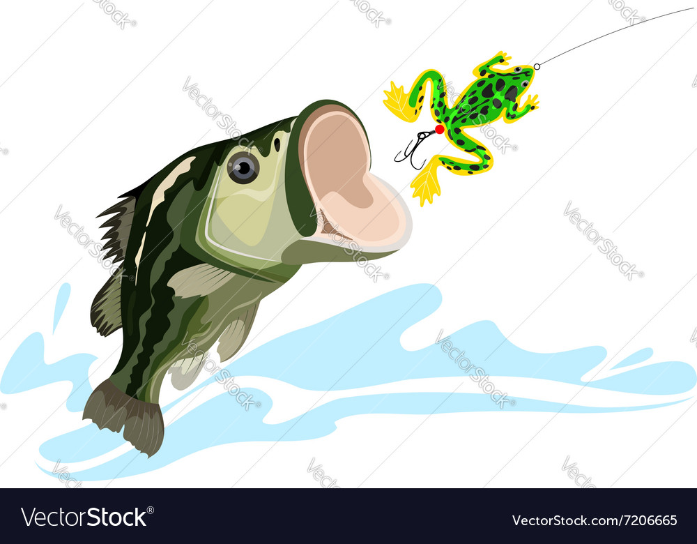 Bass and lure vector