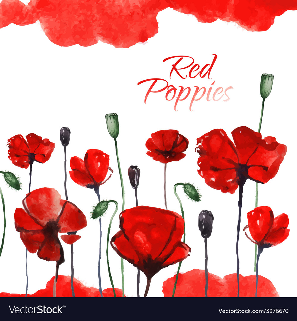 Watercolor red poppies vector