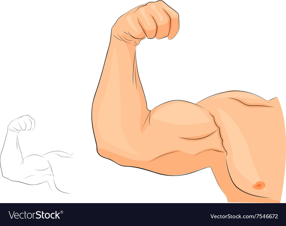 Muscles of the hand anatomy vector