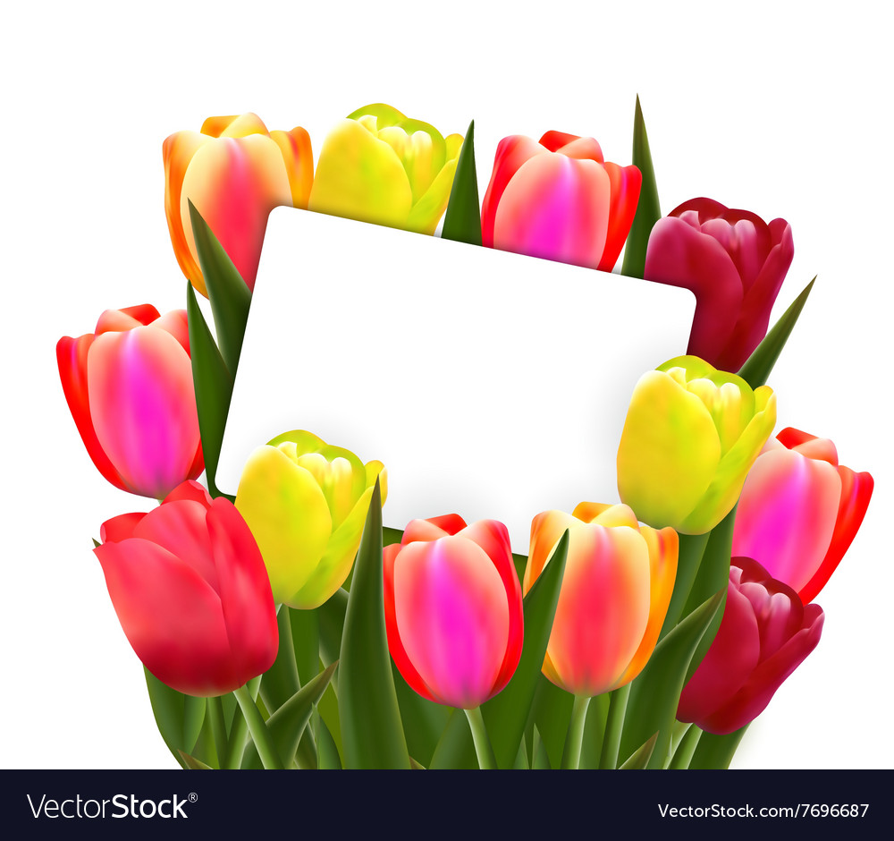 Red and yellow tulips vector