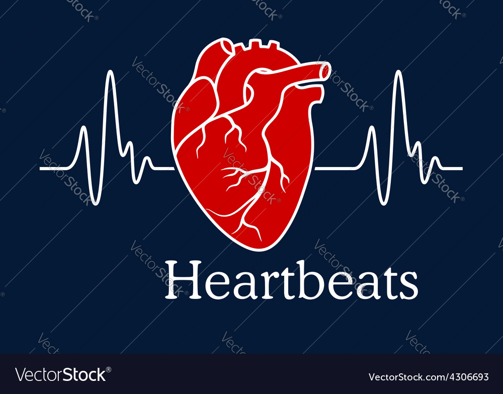 Human heart with white heartbeats cardiogram vector