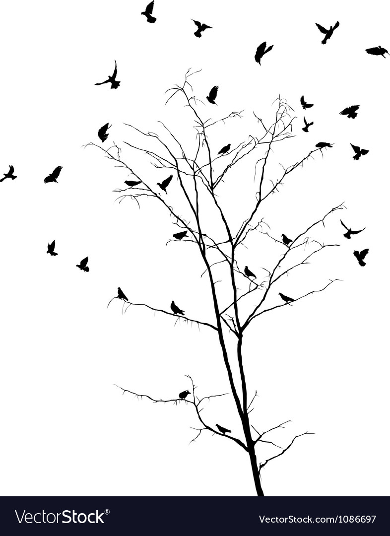 Birds and tree silhouettes vector