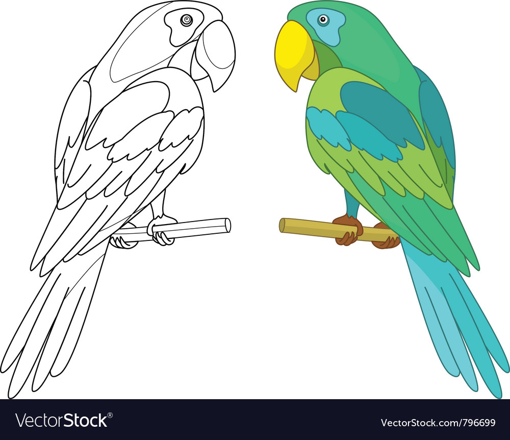 Parrot on a perch vector