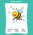 bee vocabulary part of body vector image