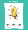 bird vocabulary part of body vector image